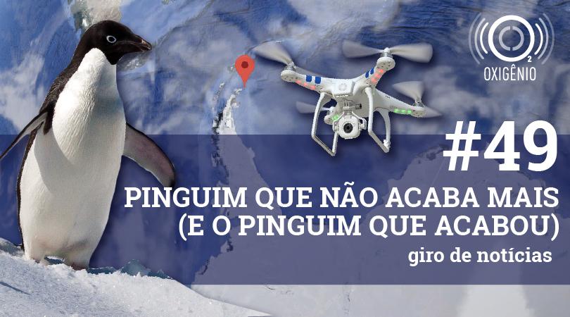 #49 – Giro de notícias: Pinguim que não acaba mais (e o pinguim que acabou)
