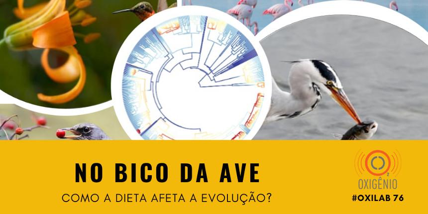 #76 Oxilab: Aves que comem de tudo: um ralo na evolução