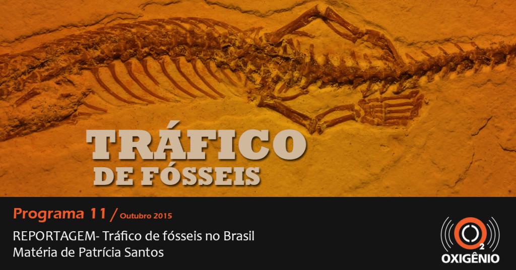 Tráfico de fósseis brasileiros: o caso da serpente de 4 patas (parte I)