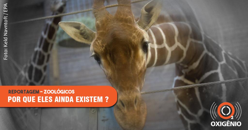 Zoológicos: por que eles ainda existem? (parte I)