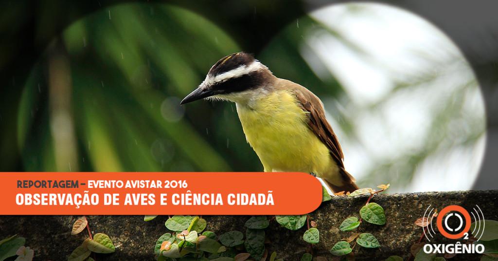 Observação das aves une amadores e especialistas na conservação das espécies.