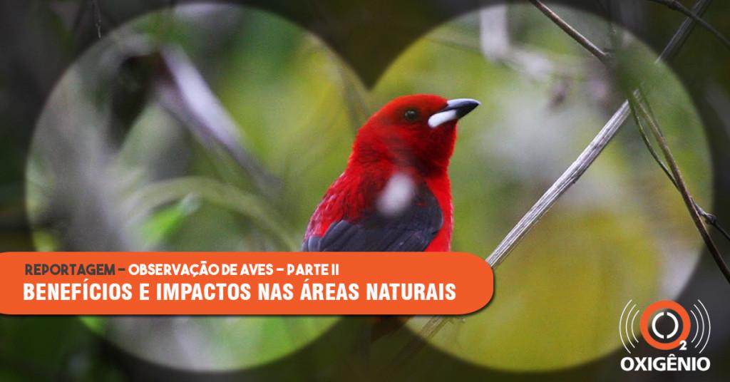 Observação de aves em unidades de conservação: benefícios e impactos potenciais