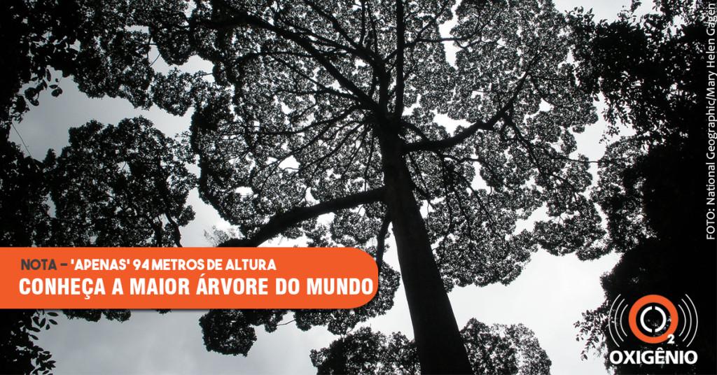 Novo recorde para a maior árvore tropical