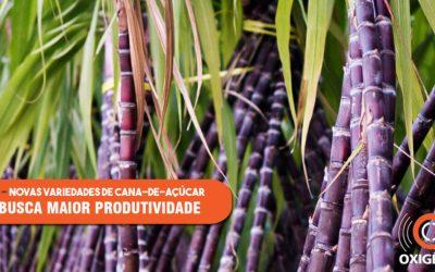 Instituto Agronômico de Campinas lança duas novas variedades de cana-de-açúcar