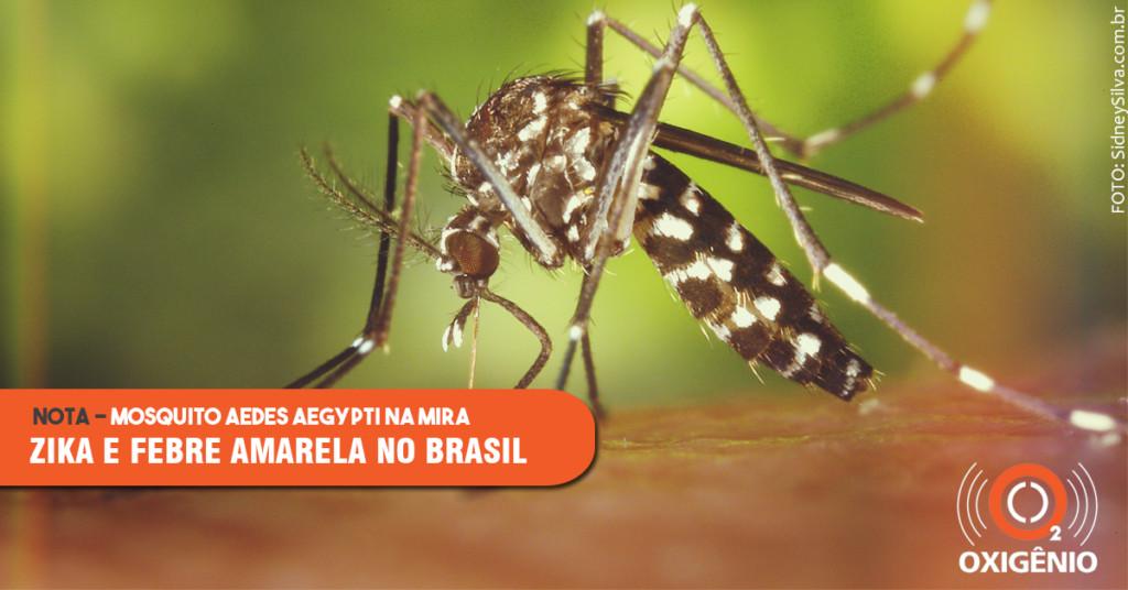 Mosquitos e doenças: estudos avançam em conhecimento