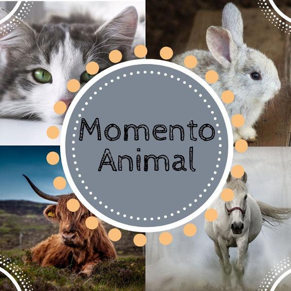 Momento Animal